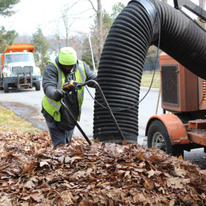A City employee collects leaves in a neighborhood